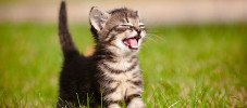 img-article-101-amusing-cat-facts-fun-trivia-about-your-feline-friend