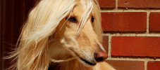 img-article-top-10-crazy-cool-dog-breeds